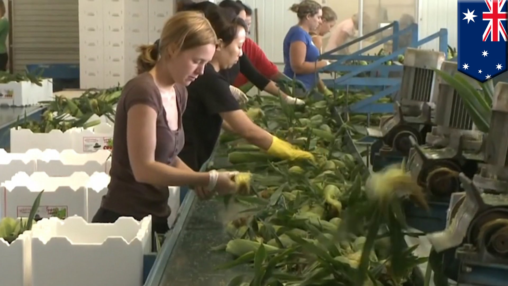 tax changes to working holiday visas will affect fruit picking and farming industry in Australia
